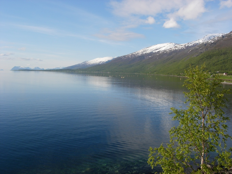 Mountains and Fjords I