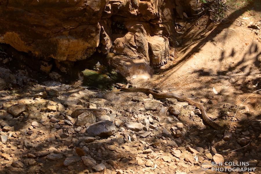 Diamond Python, Outback, Australia