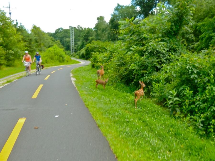Bike tour 021