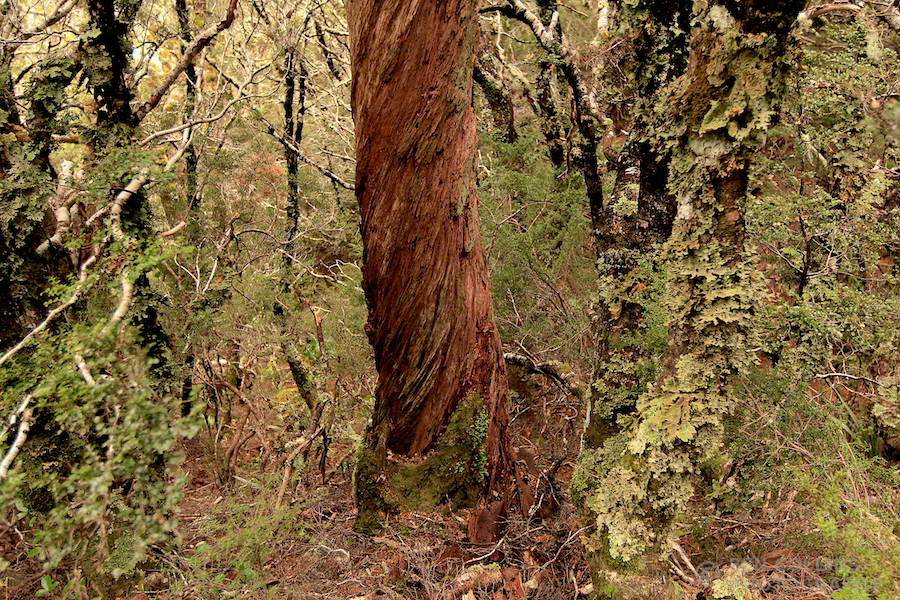 Fiordland Forest