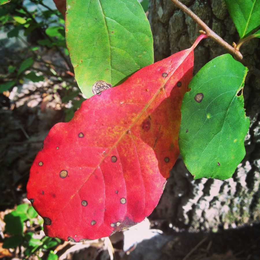 First signs of fall