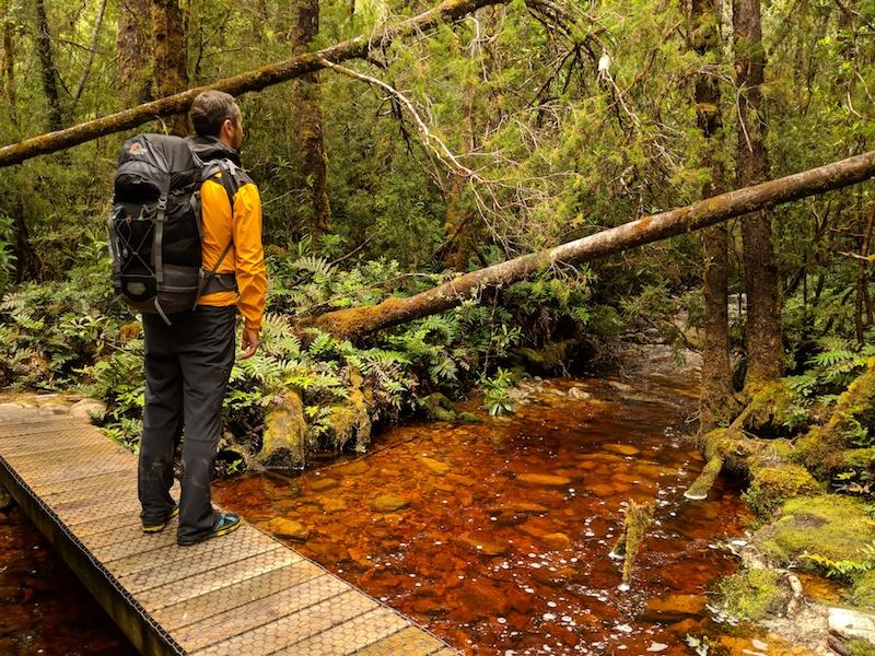 Wild Tasmanian Forest